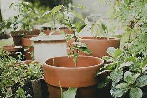Plants in Terracotta Pots