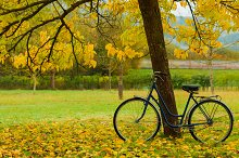 Vintage bike against a tree. Autumn