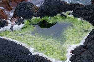 Seaweed and salt