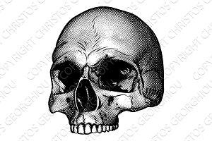 Skull Vinatge Style Drawing