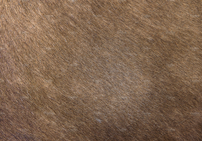 Horse Skin Hair Texture Textures Creative Market