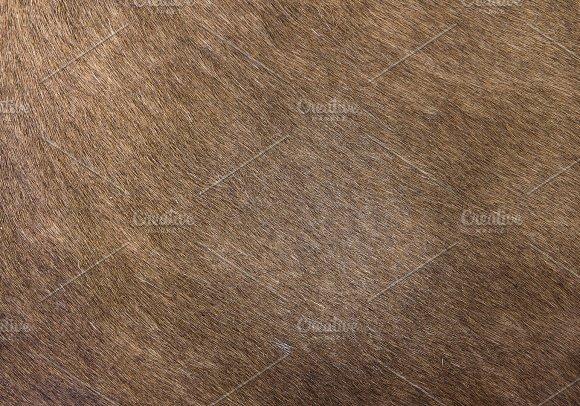 Horse Skin Hair Texture