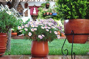Cheerful garden with flower pot