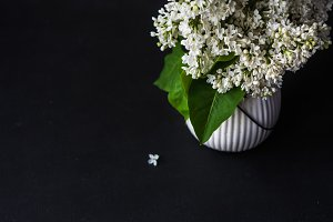 White lilac flowers in a vase