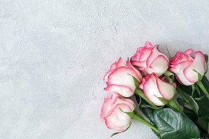 Pink roses floral background