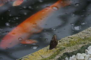 Water, fish and butterfly