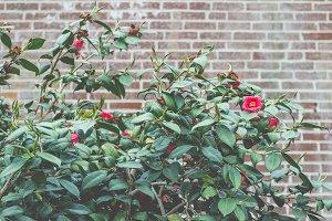 Blooms and bricks