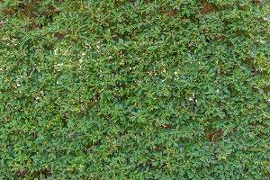 green leaf in agricultural farm