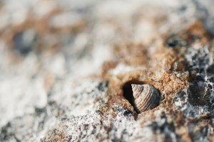 Macro seashell in nature