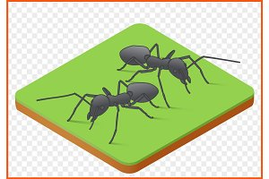 ants vector picture