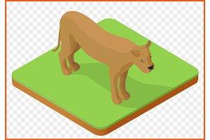 lioness vector isometric