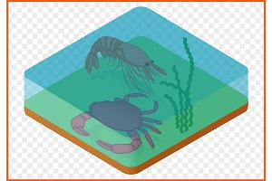 Crab shrimp isometric