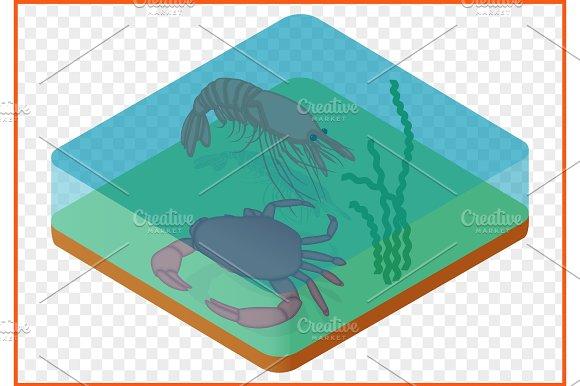 Crab Shrimp Isometric