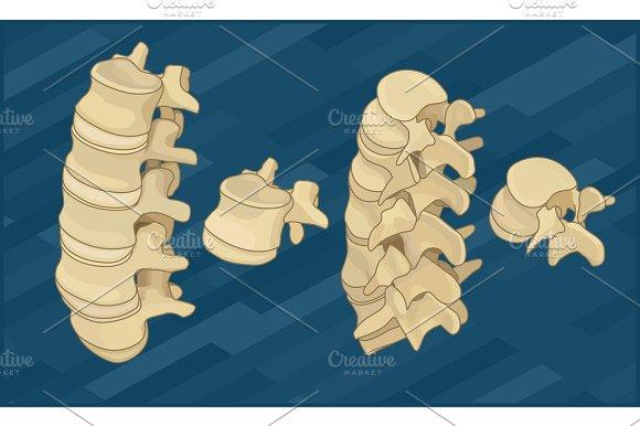Human Spine Bones Flat Isometric
