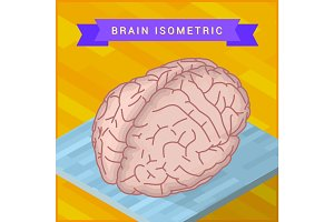 human brain flat isometric icon