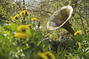 gramophone among the spring flowers