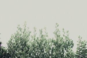 Green Leaves Growing Vertically