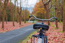 Vintage bike against a tree. Autumn