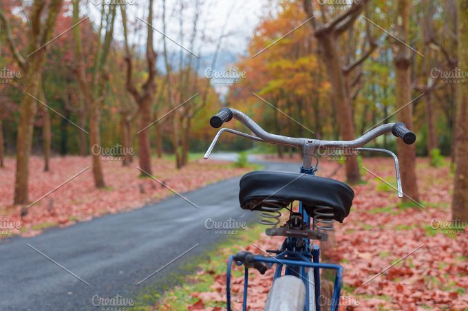 Vintage bike against a tree. Autumn - Transportation