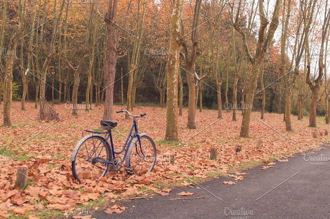 Vintage bike against a tree. Autumn - Transportation