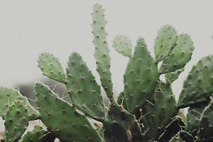 Green Cactus with Needles