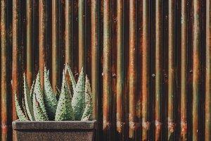 Aloe against Metal