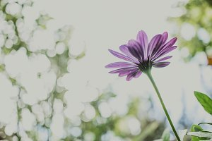 Purple Daisy from Low Down