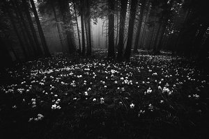 White flowers in the dark forest