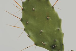 Cactus with Spider