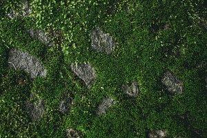 Green Moss Path