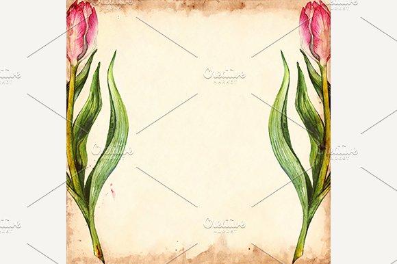 Tulip Flower Grunge Background