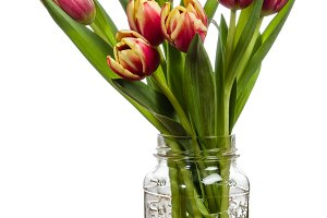 Bouquet of tulips in a mason jar
