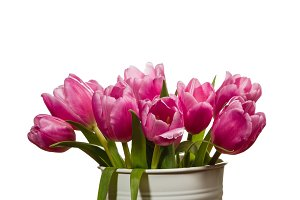 Fresh pink tulips in a white can