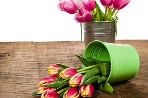 Pink tulips in a bouquet container