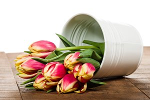 Fresh tulips in a white metal container