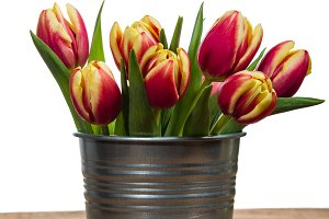 Silver container with fresh tulips