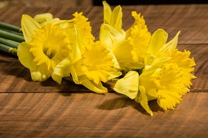 Yellow daffodil flowers on the table