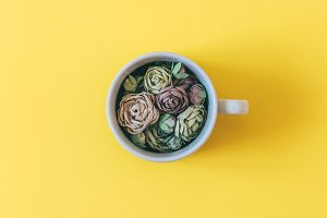 colorful flowers in a Cup