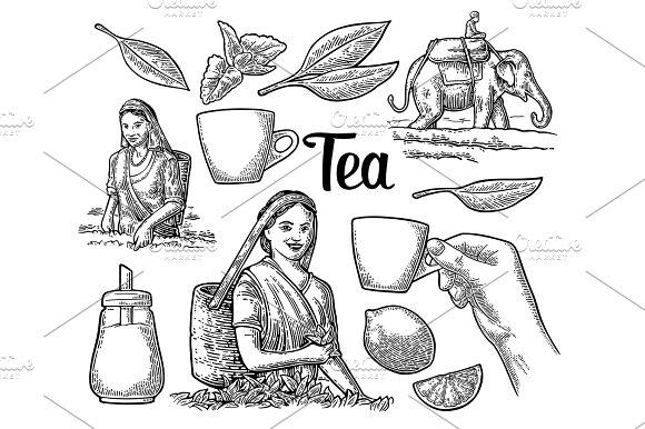 Female Tea Pickers Harvesting Leaves Rider On Elephant Lemon Cup