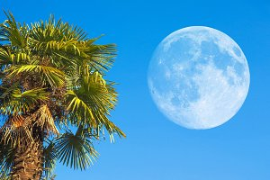 palm tree with moon
