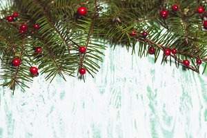 Fir brahcnes with holly berries