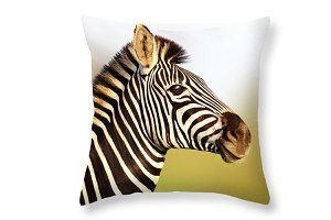 Zebra in golden sunlight print