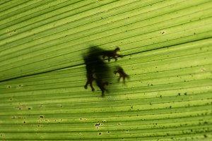 Frog in Leaf shadow