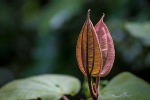 Jungle Leaf Flower