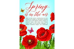 Spring poster of vector poppy flowers bloom