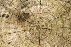 Trunk Circles Detail