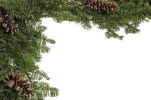 Evergreen border with pine cones