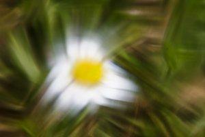 Elastic flower