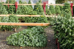 Christmas tree sales lot