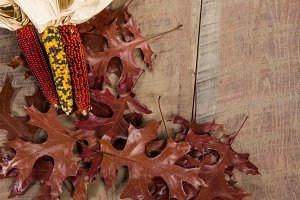 Indian corn and fall leaves